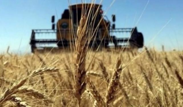 Rusya'nın Türkiye'ye buğday ihracı arttı