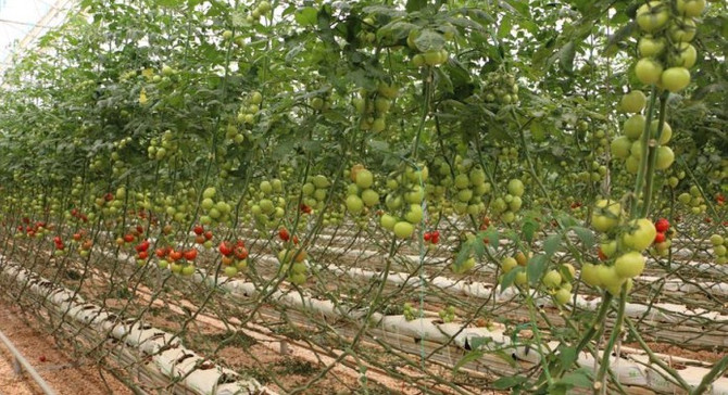 Köyde yetişen her ürün organik değildir