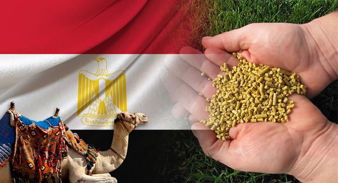 Mısırlı firma 200 ton/ay mısır gluteni ithal edecek