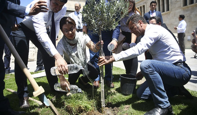 CHP'liler Meclis'e zeytin fidanı dikti
