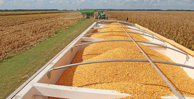 Emtiada ilk yarının kazananı buğday oldu, şekerin tadı kaçtı