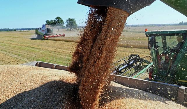 Geç ve düşük açıklanan buğday fiyatının çiftçiye yararı yok