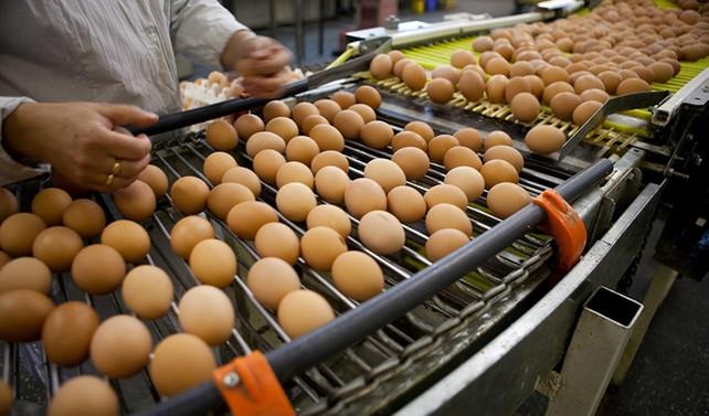Yumurta fiyatları sert düştü