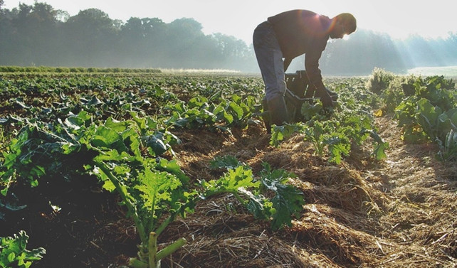 Tarımsal istihdam geriledi