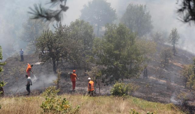 Düzce'de 20 dönüm fındık bahçesi yandı