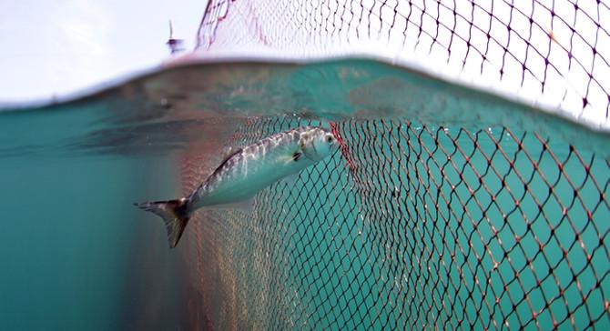 Balığa adanmış bir belgesel: Lüfer