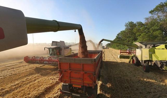 Buğday piyasası işlemez hale geldi