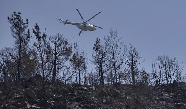 İzmir'de 800 hektarlık orman yok oldu