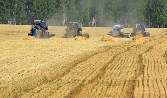 Bayraktar: Buğday piyasası bozuldu