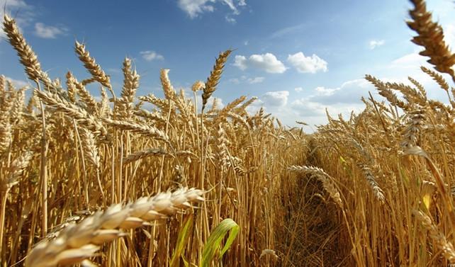 Sertifikalı hububat tohumluk fiyatları belirlendi