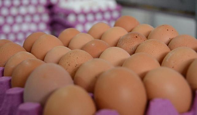 Hollanda'dan 'ilaçlı yumurta' açıklaması