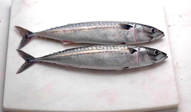 Kota ve lisansla, sürdürülebilir balıkçılık politikası uygulanıyor