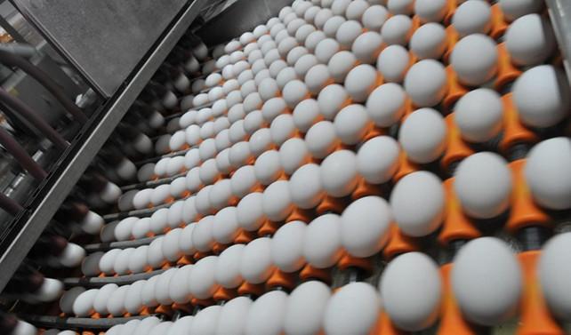 Yumurtada her türlü denetime açığız