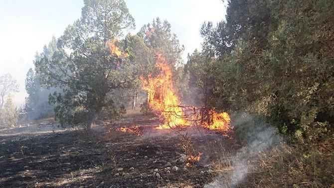 Ev yangını ormana sıçradı