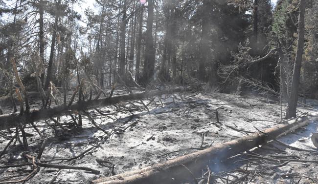 Bilecik'e sıçrayan yangın hala devam ediyor