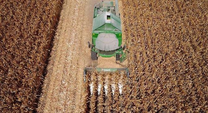 Beyaz et sektörü büyüdü, mısır üretimi yüzde 81 arttı