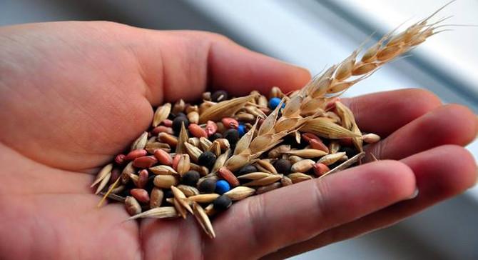 Türkiye İsrail'e tohumluk ihraç ediyor