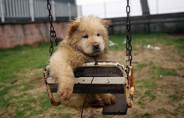 Hayvanlara işkence edenlere hapis cezası yolda