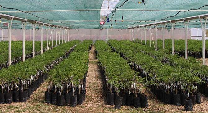 Gelir getirici 9.7 milyon fidan toprakla buluştu