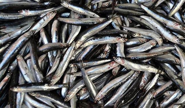 Tezgahta 15 liradan ucuz balık yok