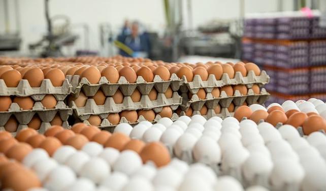 Yumurta ihracatı 11 yılda 21 kat arttı