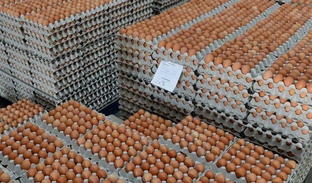 Avrupa'ya 6 yıl sonra yumurta ihraç edildi