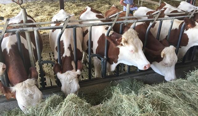 Hayvancılık sektörü Antalya'da masaya yatırılacak