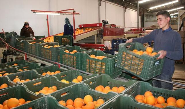 TİM: Tarım ihracatı ilave kaynak ile artacaktır