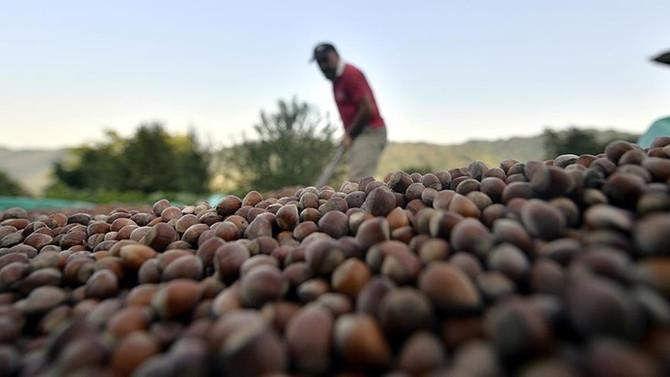 Torun: Fındık fiyatı bölge insanını olumsuz etkiledi