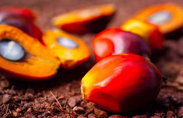 Bazı tarım ürünlerinin ithalatında sıfır gümrük uygulaması kaldırıldı