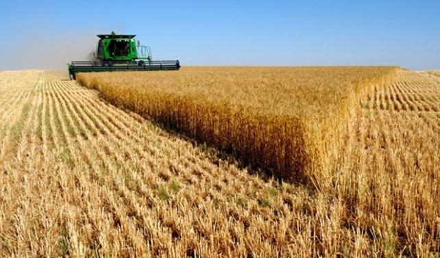 Dünya gıda fiyatları yatay