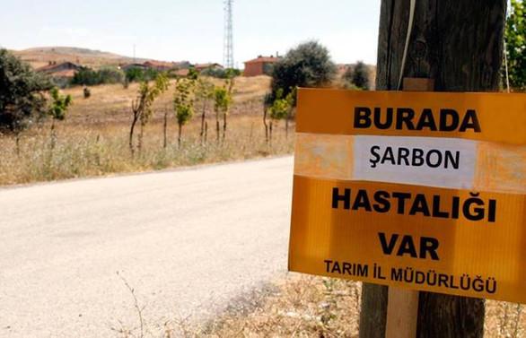 Trabzon'da şarbon şüphesi