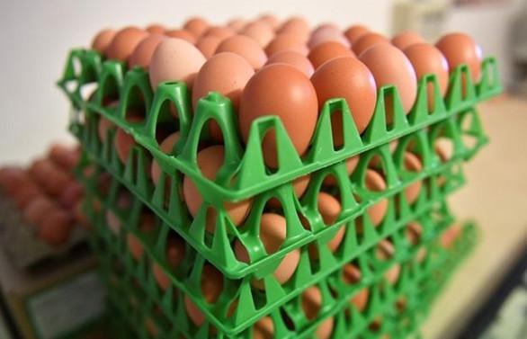 Yumurta üreticisinin hedefi Körfez