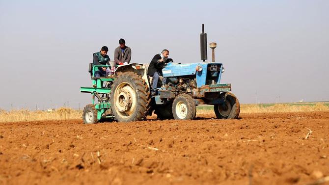 Suriye'nin buğdayı Türkiye'de hayat bulacak