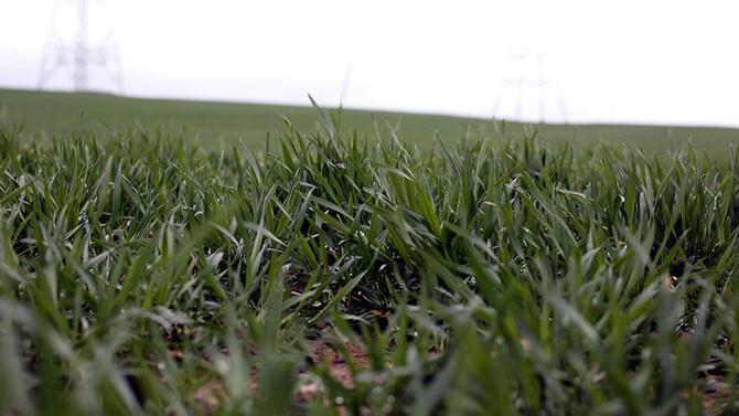 Türk tohumu tüm dünyada filizleniyor