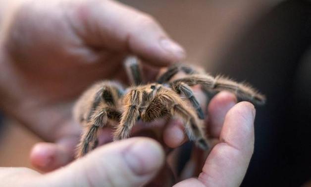 40 bin canlı hayvan gümrüğe takıldı