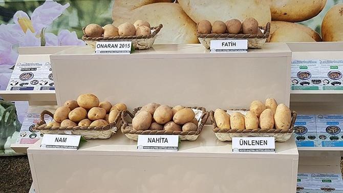 Yerli patates tohumu 'Nahita'nın satışı yapıldı