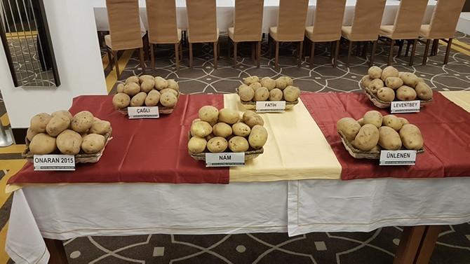 Yerli üç patates tohumunun daha satışı yapıldı