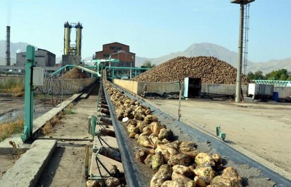 Şeker fabrikaları için ilk iki ihale yapıldı