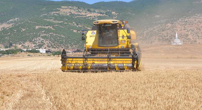 ANTBİRLİK buğday alım fiyatını açıkladı
