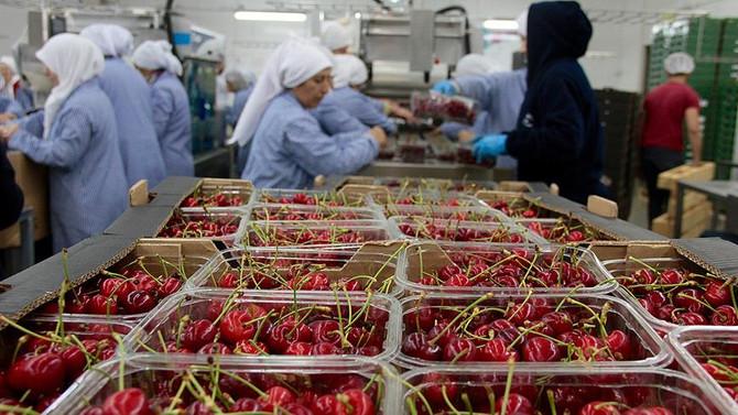 Yaş meyve sebze ihracatına Rusya dopingi