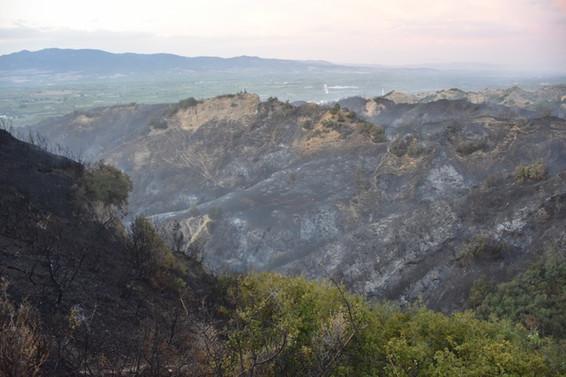 Manisa'daki yangında 50 hektarlık alan zarar gördü