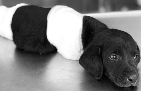 Yavru köpek vahşetiyle ilgili bir kişi gözaltına alındı
