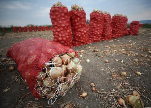 Soğan fiyatları haftaya düşüşe geçecek