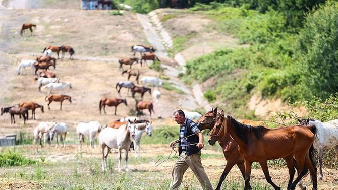 Beykoz'daki atlar tahliye edilecek