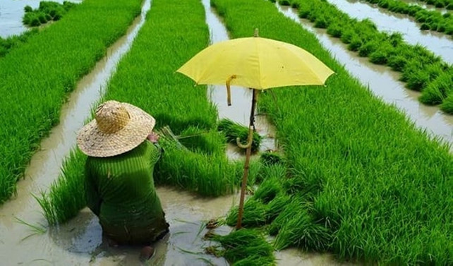 Haziranda küresel gıda fiyatları geriledi