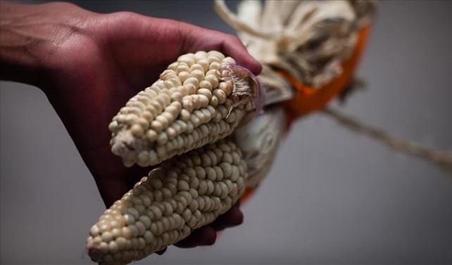 Monsanto'ya 289 milyon dolar tazminat cezası