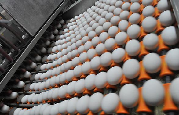 Temmuzda 1.6 milyar yumurta üretildi