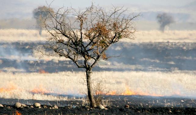 Dünyanın verimli toprak kaybı her yıl 12 milyon hektar