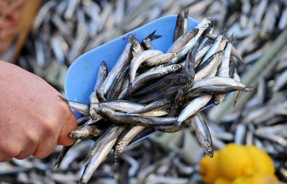 Türkiye balık ürünleri ihracatında 1 milyar doları geçti